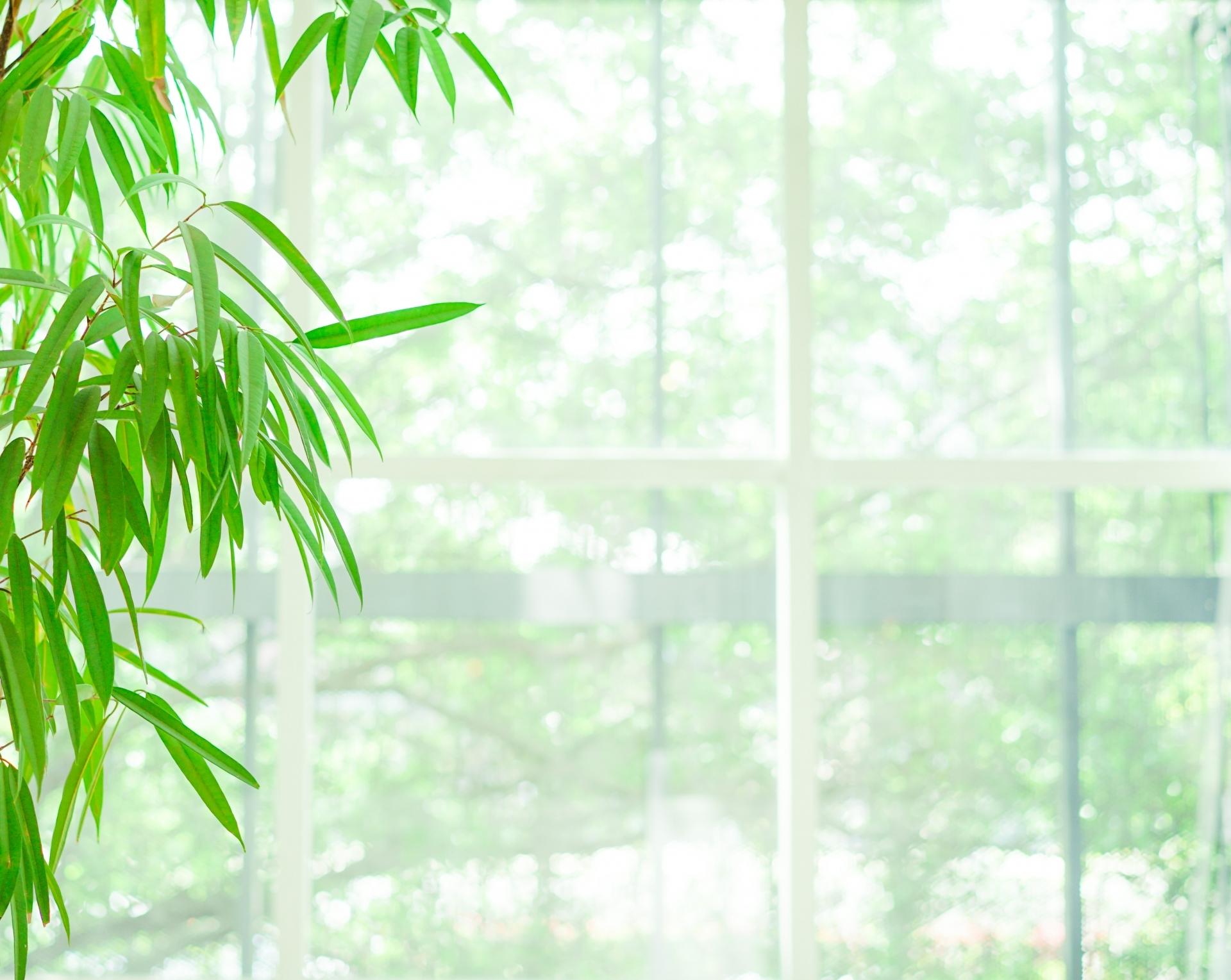 グリーンカーテンにできる植物10選!ヘチマやきゅうり以外のおすすめは?