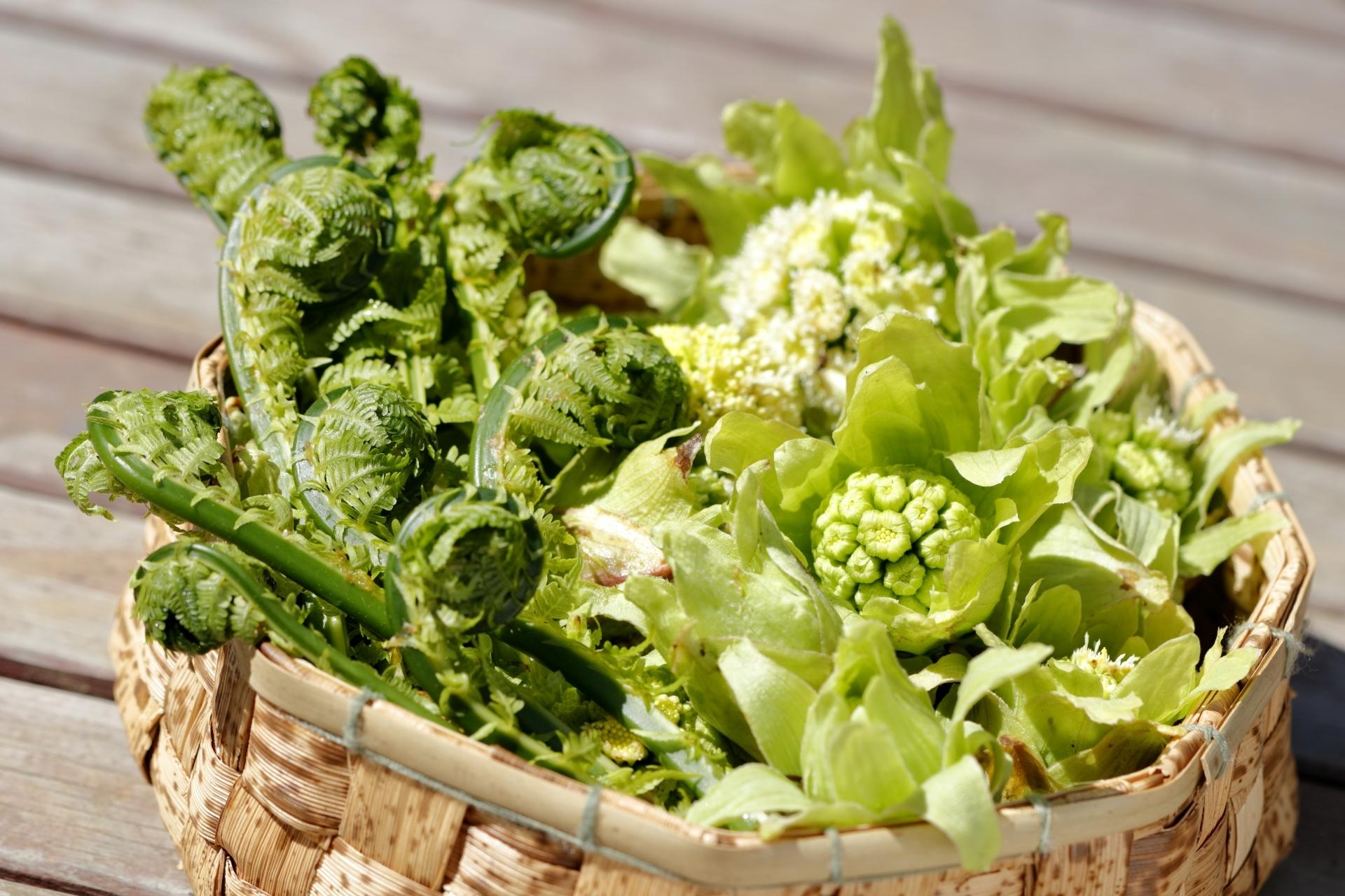 春の山菜10選!3月〜6月のおすすめ品種と美味しい食べ方をご紹介!
