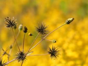 ひっつき虫とは?くっつき虫?植物?その正体と上手な取り方をご紹介!