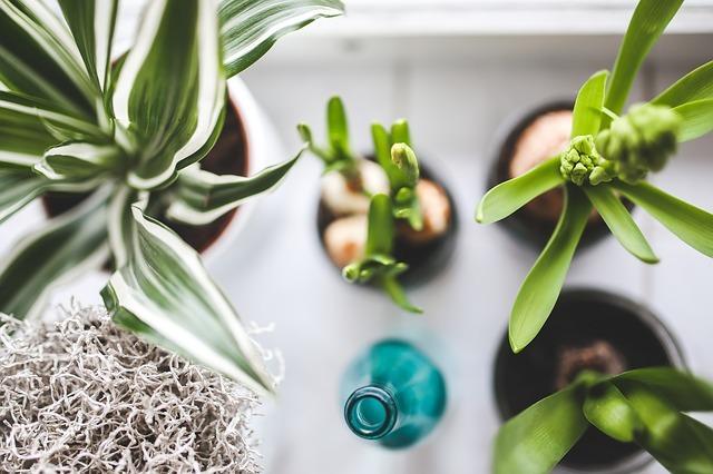 観葉植物の「レイアウト術5選」&インテリアにおすすめの「植物5選」をご紹介!