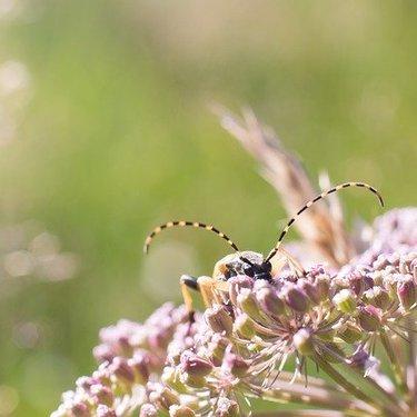 カミキリムシの幼虫(テッポウムシ)とは?その生態と駆除方法を解説!