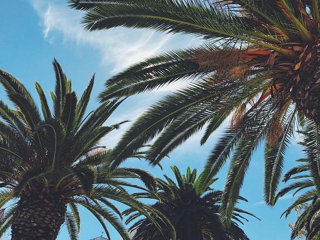 熱帯植物とは?代表的な品種と特徴をご紹介!自宅栽培でのオススメは?