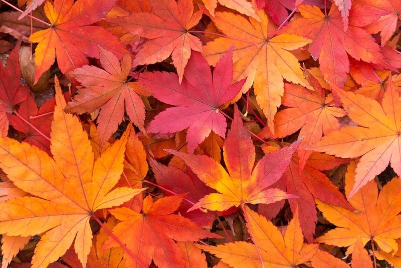 秋の植物10選!実りの秋・収穫の秋といわれる季節の代表的な植物は何?