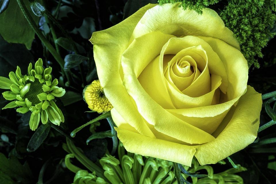 緑の花は珍しい?グリーン系の花の品種と、アレンジ方法を一挙ご紹介!