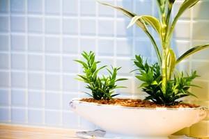 観葉植物のコバエ対策!発生を未然に防ぐ方法と退治方法をご紹介!