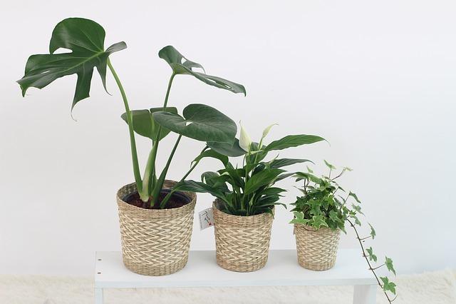 観葉植物18選!6つの目的別におすすめ植物をランキング形式でご紹介!