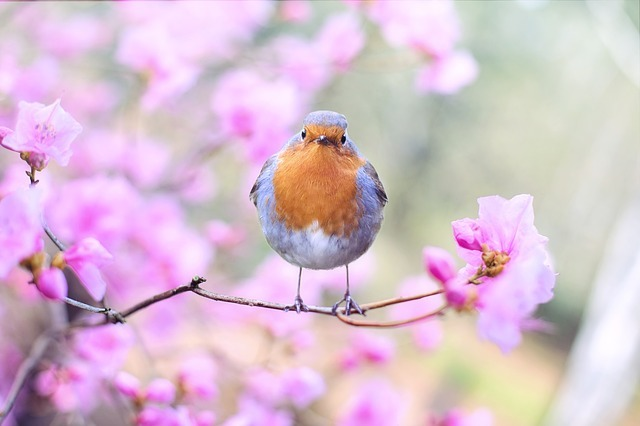 花の日本代表5選!「日本の花」と呼ぶに相応しい品種と花言葉をご紹介!