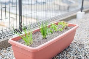 プランターで家庭菜園をつくろう!初心者向けにプランター栽培のコツを紹介!