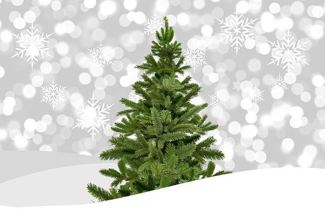 クリスマスツリーって何の木?ツリーに使われる木の種類と名前を一覧でご紹介!