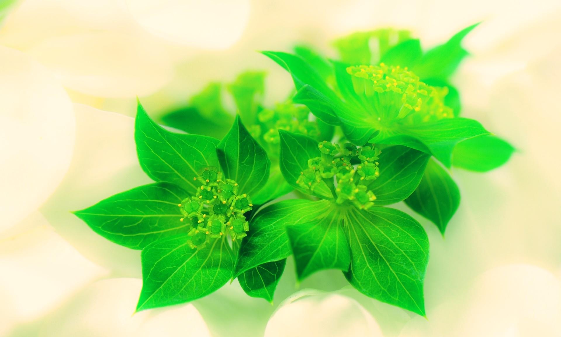 ブプレリウムの育て方!切り花や花束へのアレンジメント方法もご紹介!