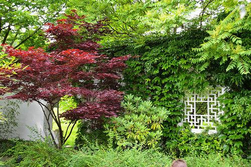 目隠し用の庭木の選び方!植える前に必ず把握しておくべき9つのこと