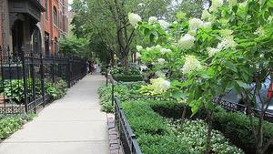 自宅や庭の目隠しにおすすめの庭木15選!おしゃれで人気な常緑低木は?