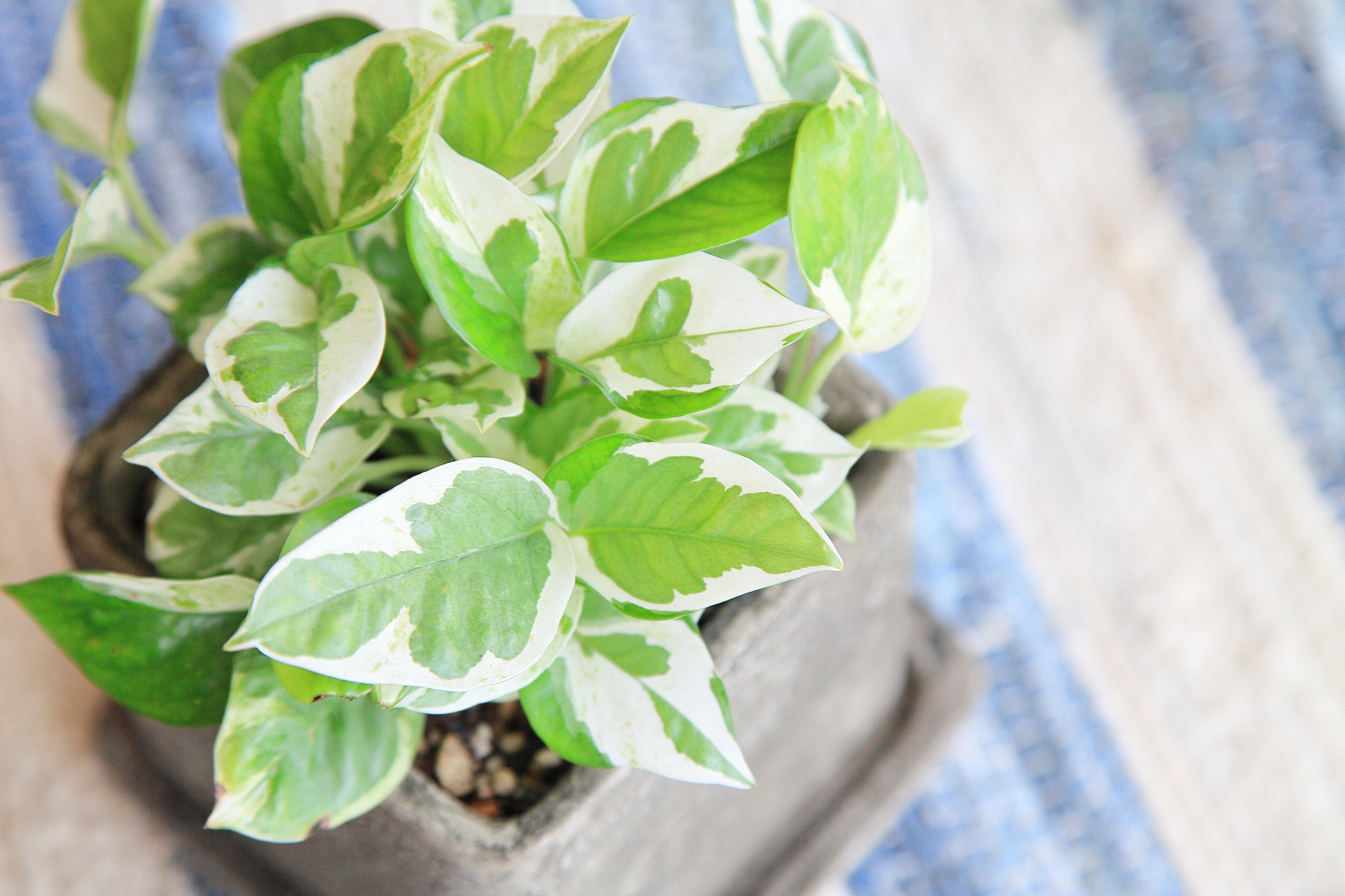 インテリアに人気の観葉植物TOP10!お部屋を緑でおしゃれにしよう!