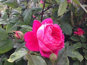 バラの季節っていつなの?旬なシーズンに合わせたバラの名所もご紹介!