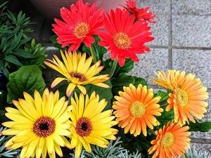 寄せ植えを上手にみせる配色とは?4つのパターンと配色例をご紹介!