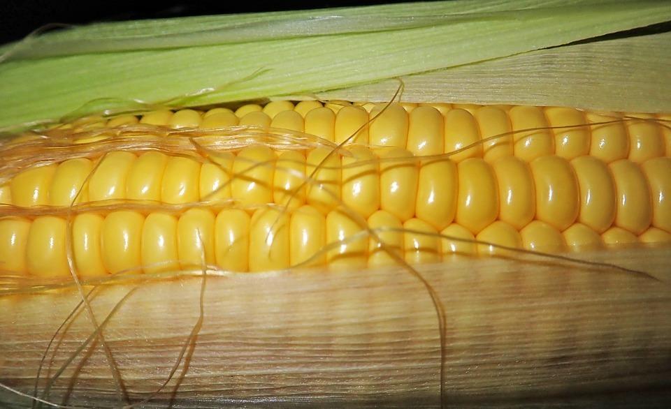 スィートコーンとは?旬な時期や産地はどこ?トウモロコシとは違う?