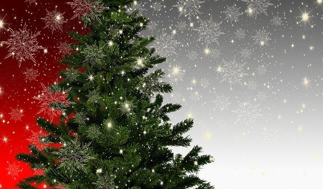 クリスマスツリーの用意の仕方!もみの木がない時に代用できる植物をご紹介!