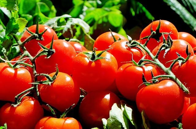 トマトの剪定方法!摘心・わき芽かきのやり方をわかりやすく図解で解説!