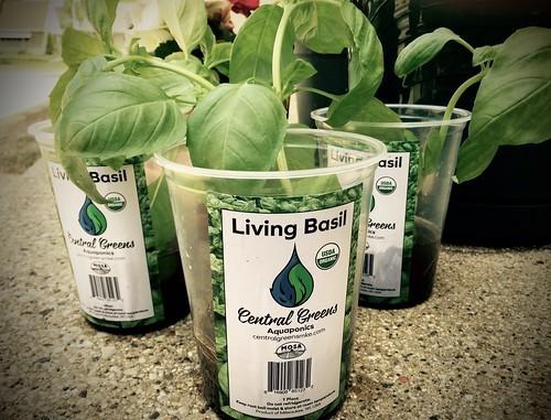 100均のアイテムで水耕栽培をしよう!便利グッズと活用方法をご紹介