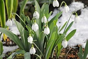 冬に咲く花13選!寒さや霜に強く、冬でも庭植えできる草花を一挙ご紹介!