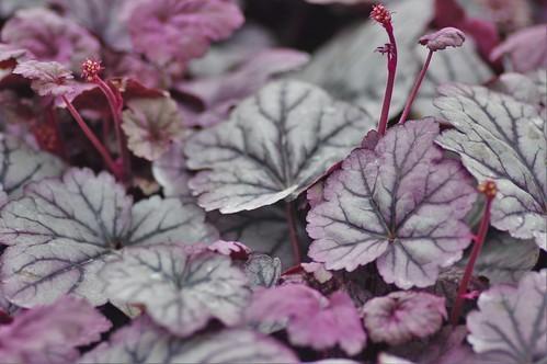 秋・冬のカラーリーフ24選!花壇などの寄せ植えにおすすめの種類は?