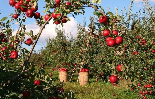 寒肥とは?肥料としての役割から、種類や与え方(時期)までご紹介!