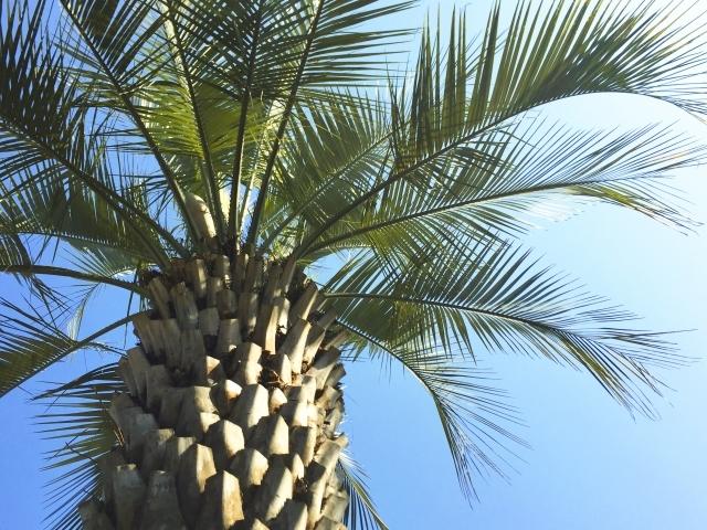 ココスヤシとは?鉢植えでの育て方と、インテリアでの飾り方をご紹介!