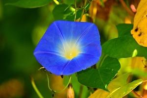 8月に咲く(咲いている)花13選!お盆や夏で連想される植物は何?