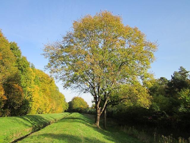 トネリコの育て方!庭木としての剪定方法や樹形管理のコツをご紹介!