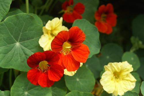 夏の花35選!日差しや暑さにも強く、夏のガーデニングに向いた植物は?