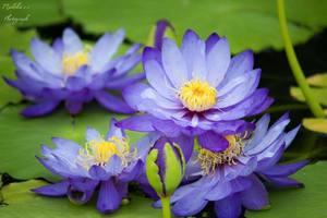 紫色の花・植物20選!薄紫や青紫に咲く草花などを一覧でご紹介
