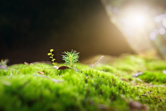 苔の種類図鑑【画像あり】庭に生える苔や人気の高い苔を10種紹介!
