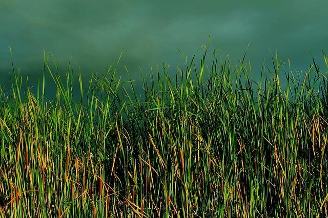 ホタルイとは?水田雑草としての発生時期やおすすめの除草剤をご紹介!