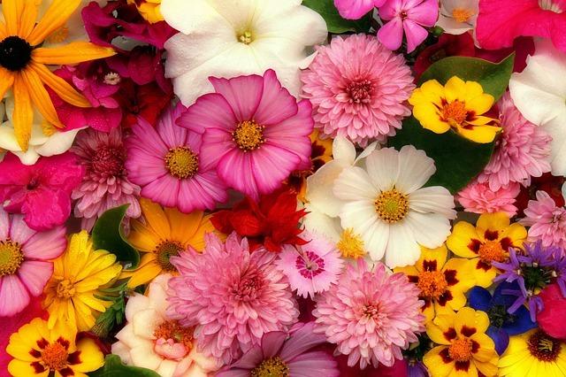 世界の国花(40ヶ国)まとめ!日本や世界各国の国花・国樹を一覧でご紹介!