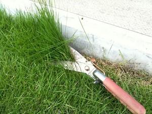 芝生の除草剤の使い方!芝生を枯らさずに上手に雑草防除する方法とは?