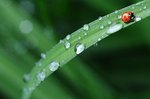 雨の種類(29種)!名前と特徴を一覧でご紹介!青葉雨や桜雨ってどんな雨?