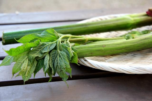 山うど(山独活)とは?山菜としての特徴や美味しい食べ方をご紹介!