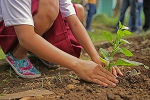パーライトとは?土壌改良剤としての特徴や適切な使用方法をご紹介!