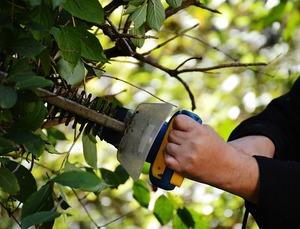 庭木の剪定を自分でする際の心得!必要な準備と基本的なやり方をご紹介!