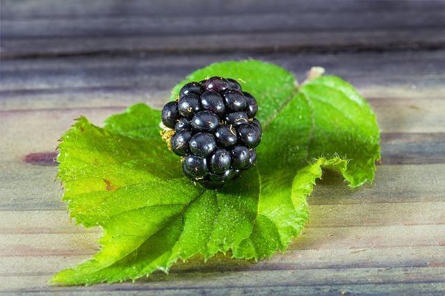 ブラックベリーの育て方!特徴や種類から植え替えなど管理のコツまで!