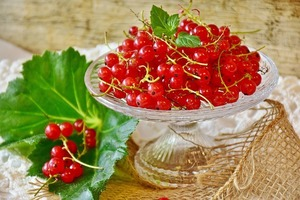 フサスグリ(レッドカーラント)とは?赤い実の特徴や味などをご紹介!
