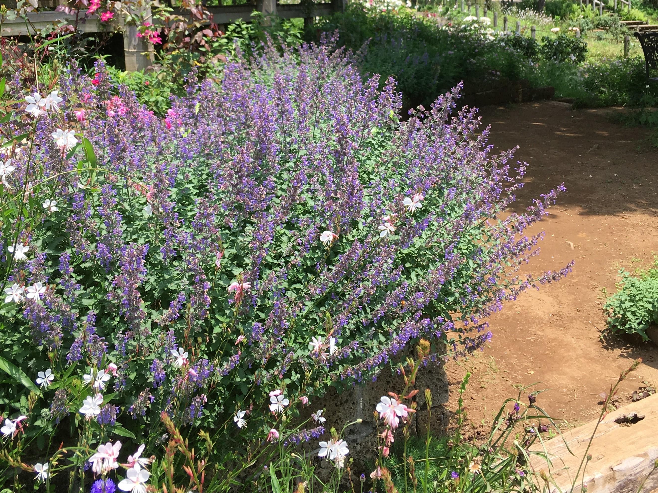 おすすめの多年草10選!ほったらかしでも簡単に育つ綺麗な草花はどれ?