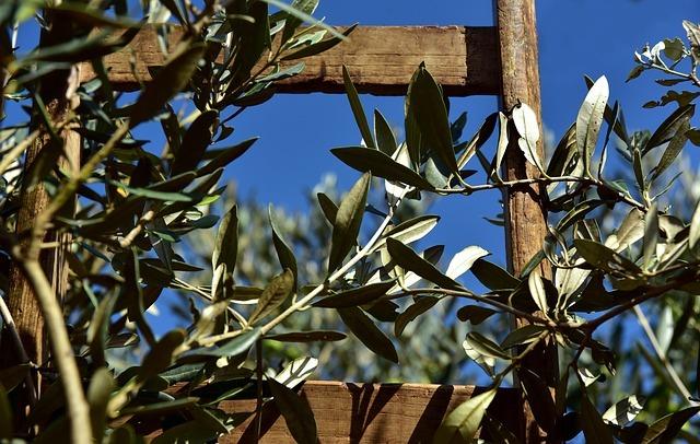 オリーブを挿し木で増やそう!ペットボトルを用いた密閉挿しの方法をご紹介!