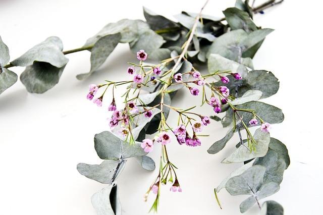 ユーカリの育て方!鉢植えでの植え替え方法など管理のコツをご紹介!