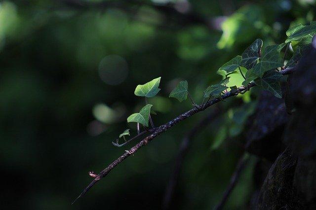 日陰で育てられる植物50選!日当たりの悪い場所でも栽培できる草花は?