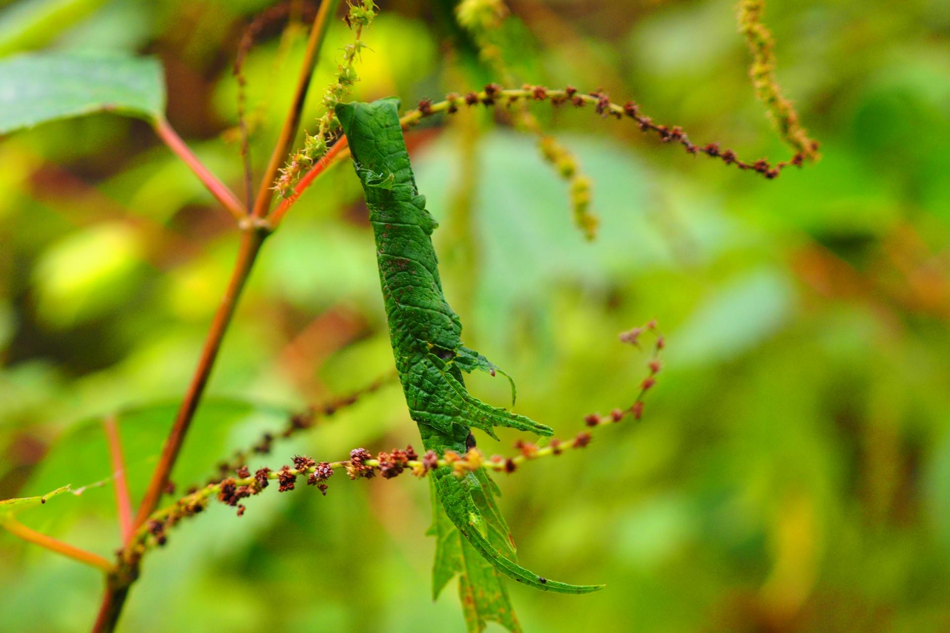 ハマキムシとは?生態・発生時期や薬剤など効果的な防除方法をご紹介!