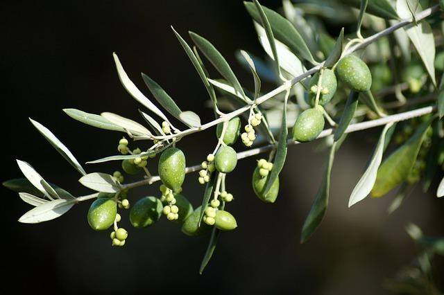 オリーブアナアキゾウムシとは?その生態や駆除・予防方法を解説!