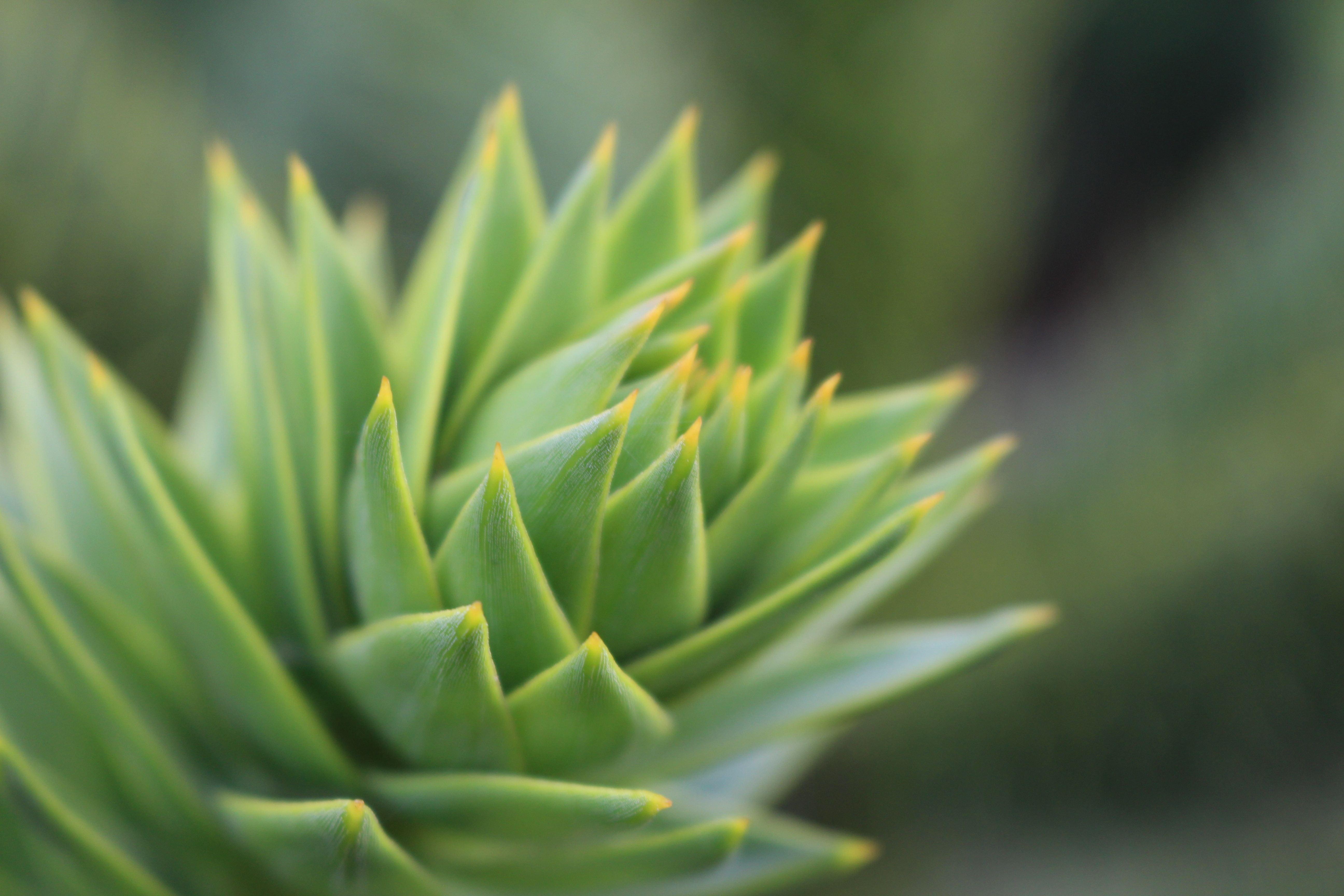 三時草の育て方!葉挿しでの増やし方や花が咲かない時の対処法をご紹介!