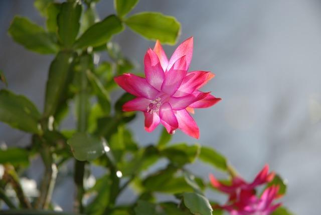 多肉植物に花が咲くと弱ることはある?花が咲いた時にすべき対処法をご紹介!