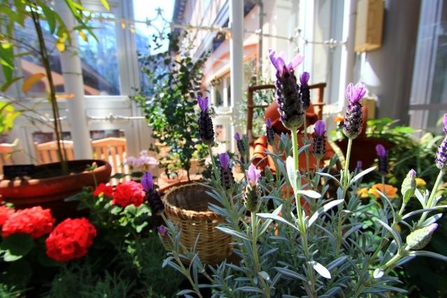 簡易温室の手作り方法!植物をベランダで管理できるような温室は自作できる?